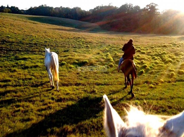 Prairies et cheval