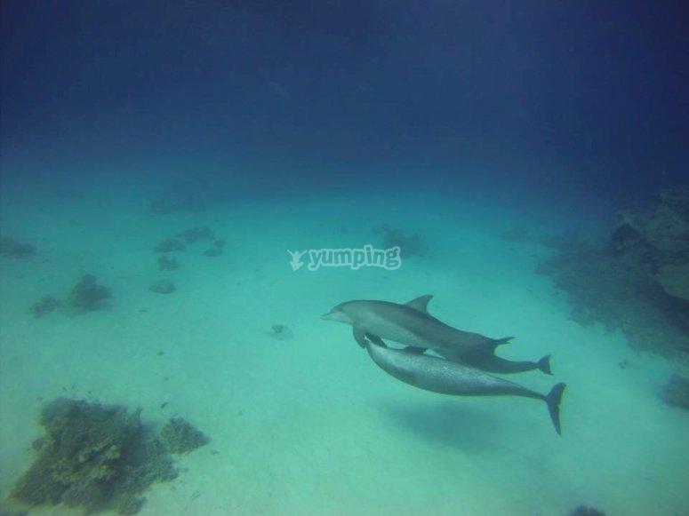Nuotando con i delfini
