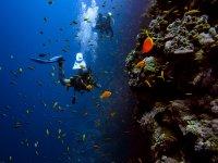 Scuba diving San Fruttuoso Bay