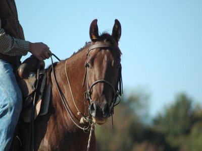 Passeggiata a cavallo (1h), Oasi di Fregene