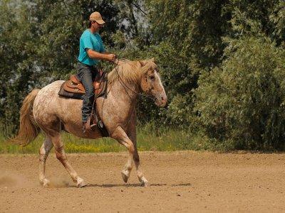 Passeggiata a cavallo (3h), Oasi di Fregene