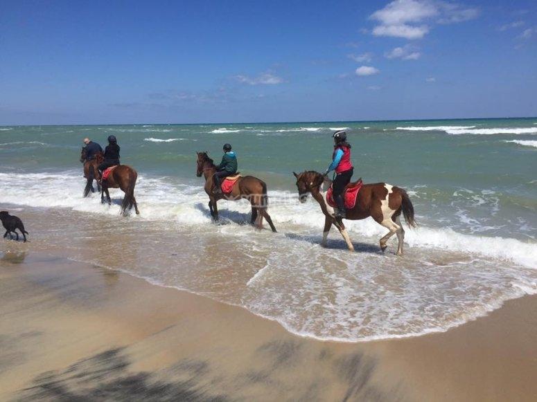 Sulla spiaggia a cavallo