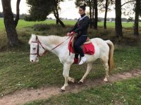 A cavallo nella pineta