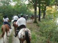 Giornata a cavallo+pranzo alla Sacra di S. Michele