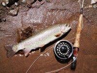 A trout
