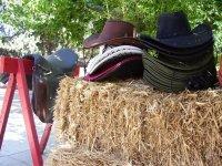 Come Cowboy