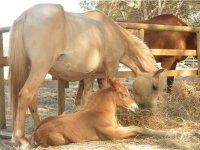 I cavalli della nostra fattoria