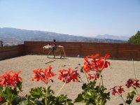 Equitazione ad Avigliano
