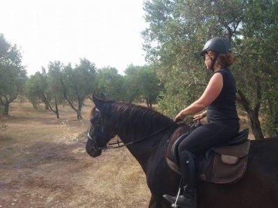 Passeggiata a cavallo tra gli ulivi leccesi (2h)