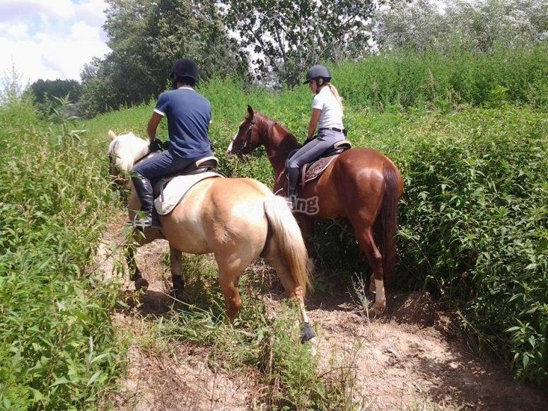 I nostri bellissimo cavalli