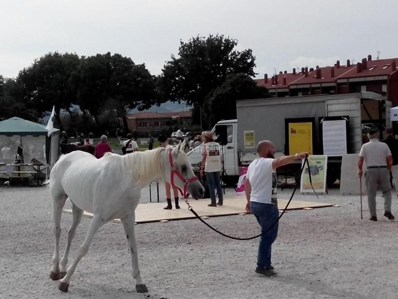 Un bellissimo cavallo bianco