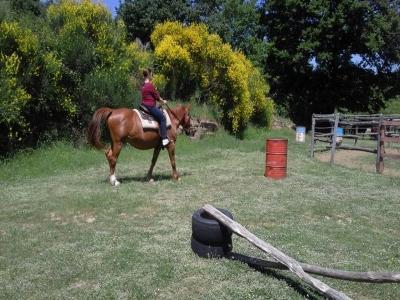 Escursione a cavallo sui colli Eugubini di 2 ore