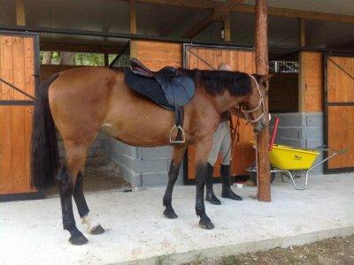 Tre cavalli Equiturismo Pertosa Asd