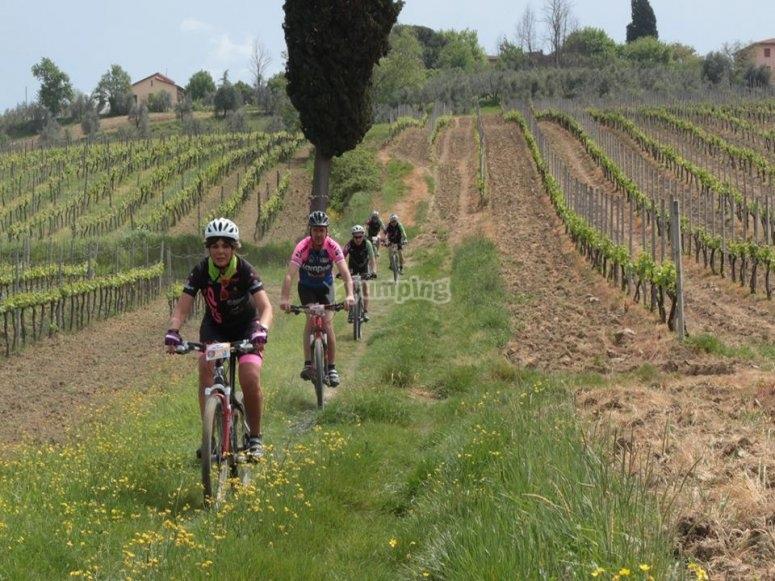 Pedalando tra le vigne