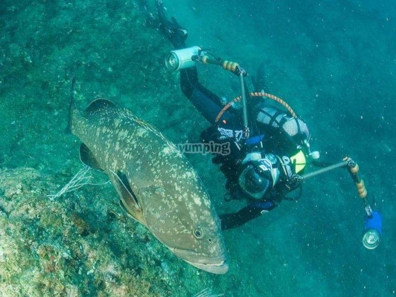 alla scoperta della fauna marina