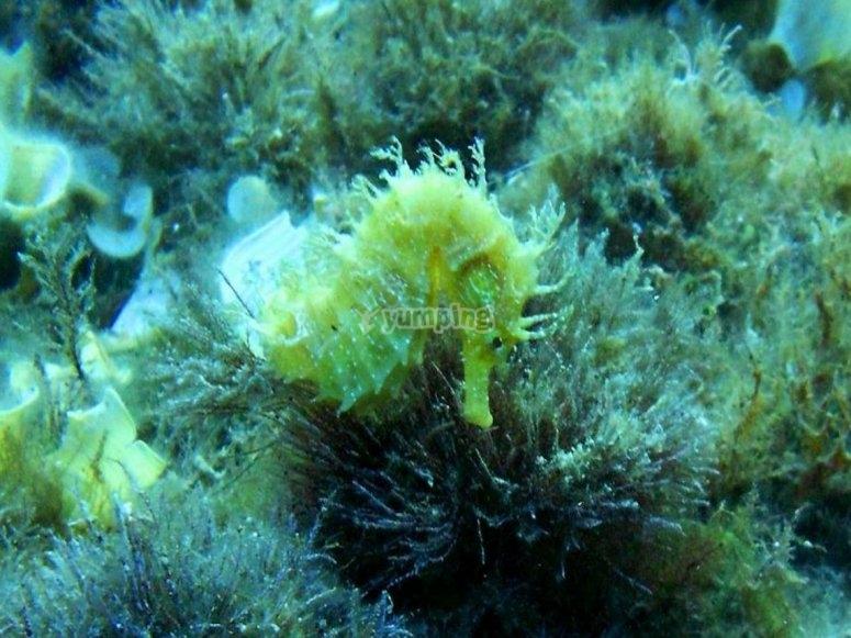 vieni a scoprire la fauna marina
