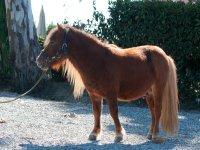 Uno dei nostri pony