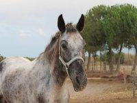 Una viso da cavallo