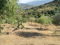 La natura di origine mediterranea