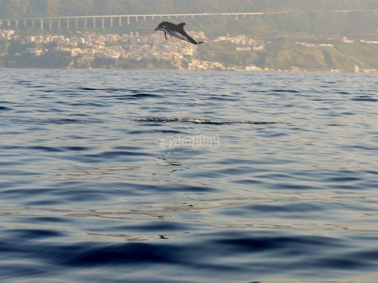 Venite a conoscere i delfini