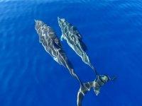 Nuotando in compagnia