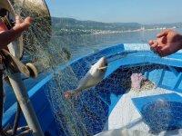 Deep sea fishing (half day), Vibo Marina
