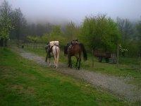 I nostri cavalli dopo un trekking vanno a riposare