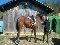 I nostri fantastini cavalli ti aspettano per esperienze uniche.