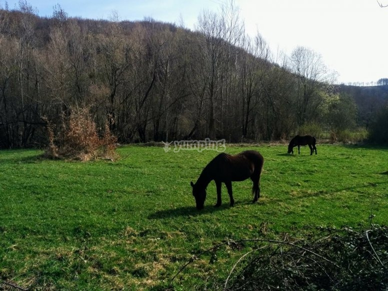 I cavalli al parco