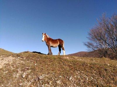 One hour horse ride to Pignola