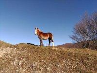 Uno dei nostri bellissimi cavalli