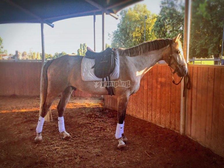 Uno dei meravigliosi cavalli
