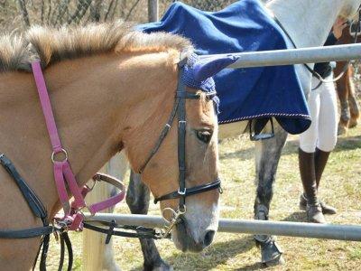 Passeggiata a cavallo di due ore a Pignola
