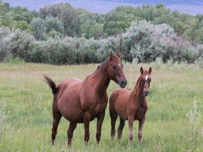 Three-hour horseback ride in Pignola