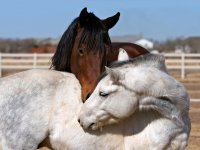 Affectionate animals