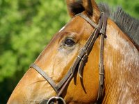 A wonderful horse