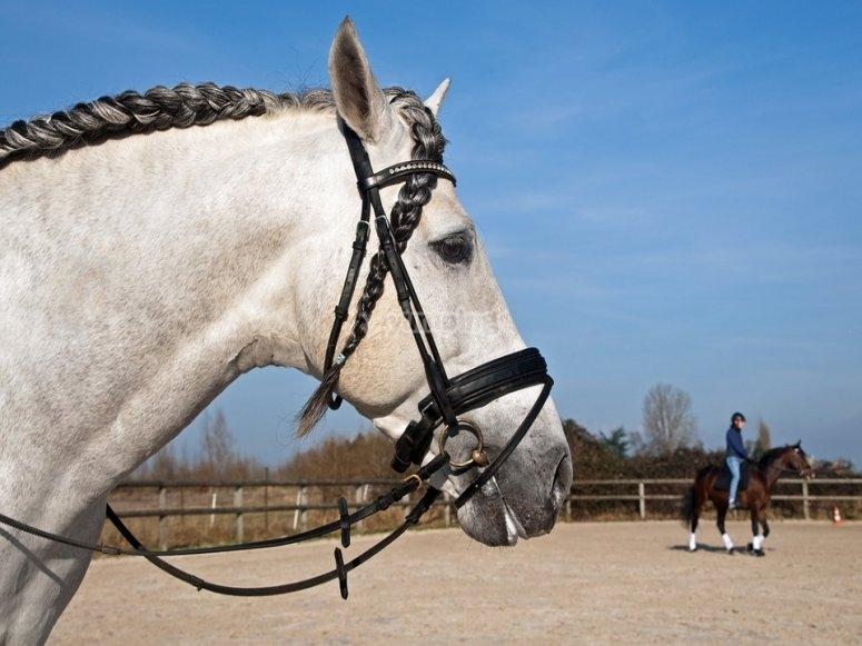 Un'esperienza unica a cavallo