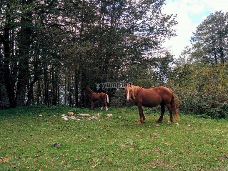 Un cavallo nella natura lucana