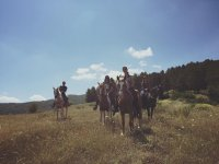 Walk in the saddle