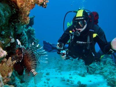 Dory Dive