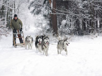 Trip with sled dogs in Cervinia (40 min)