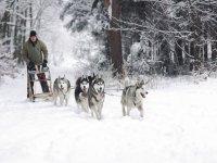 Gita con i cani da slitta a Cervinia (40 min)