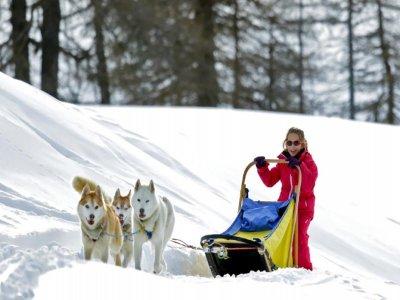 Dog sled trip for children (40min), Cervinia