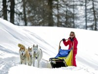Gita cani da slitta per bambini (40min), Cervinia