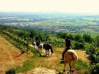 Passeggiata a cavallo di 3 ore, Verona