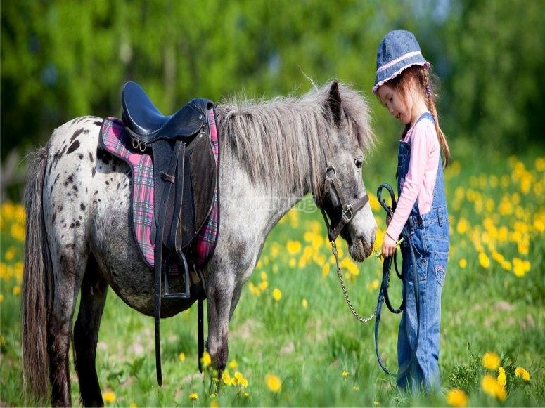 A very sweet pony