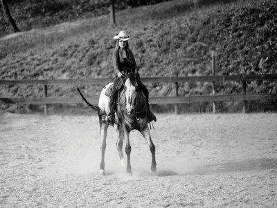 Lezione di equitazione americana di 1 ora a Verona