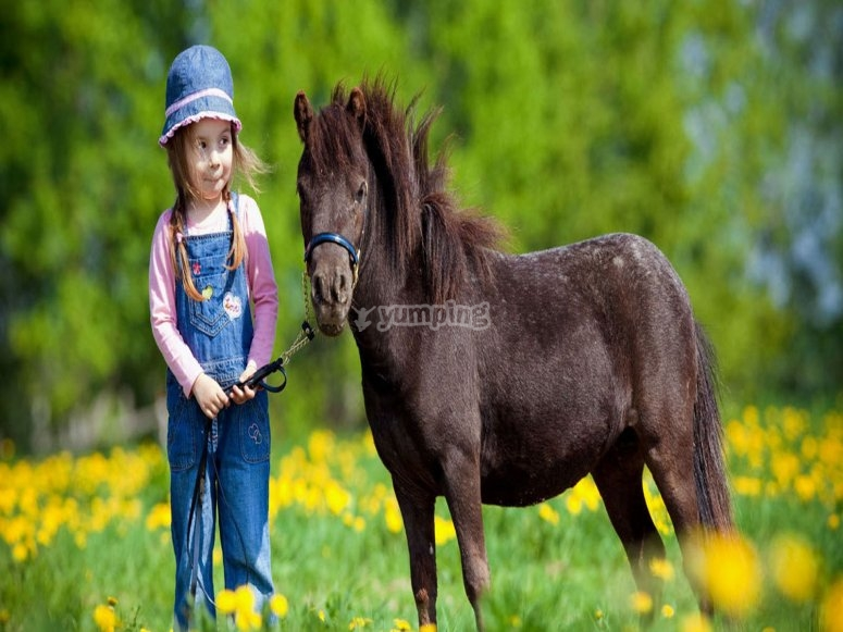 sweet horse and child