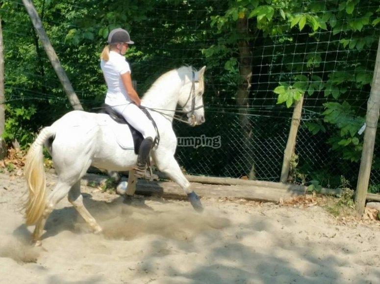 in sella a un bel cavallo bianco