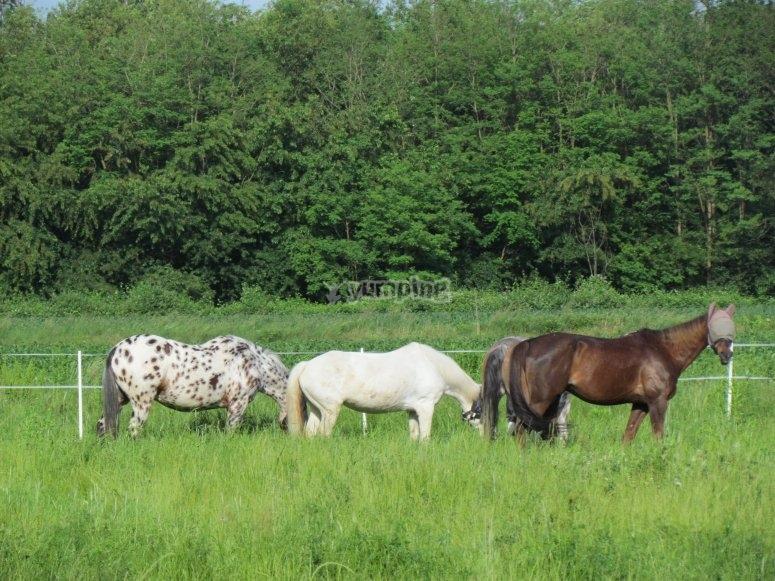 Cavalli immersi nel verde